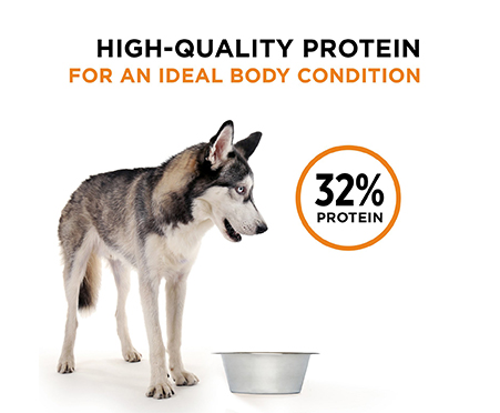 Purina Pro Plan Savor Adult Shredded Blend Beef & Salmon Formula Grain-Free Dog Food